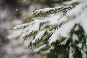 cc winter branches by Shandi-lee Cox
