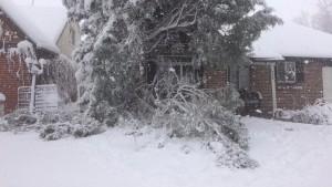 snow-damaged trees