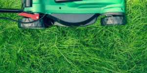 Keep grass healthy and weed-free by mowing regularly.