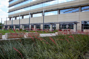 Natural Grass at Blue Cross Blue Shield Texas